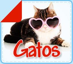 boton_gatos_final2