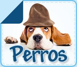 boton_perros_final2