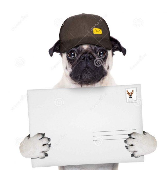 dog-delivery-post-postman-pug-delivering-big-white-blank-empty-envelope-44274164